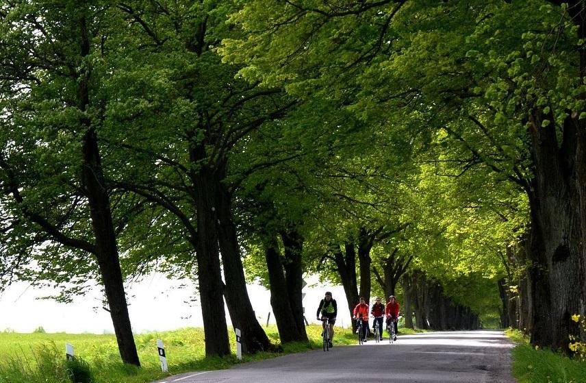 Калининград без топора: получится ли защитить от вырубки зеленые зоны и придорожные аллеи?