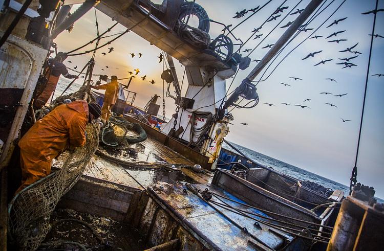 Приморские рыбаки наращивают экспорт рыбы в страны АТР