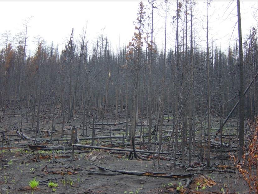 Эксперты Дальневосточного НИИ лесного хозяйства: рост числа пожаров наблюдается с 2017 года